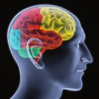 million dollar brain